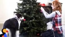 Pejsek pomáhá zdobit stromeček