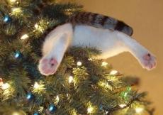 Kočky milují sundavání Vánočních stromků!